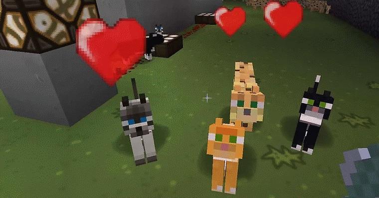 Questi sono gatti che abbiamo addomesticato seguendo questo tutorial che spiega come addomesticare un gatto su Minecraft.