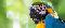 Ecco qua come addomesticare un pappagallo su Minecraft step by step di TheCommandBrick - tutorial semplice.